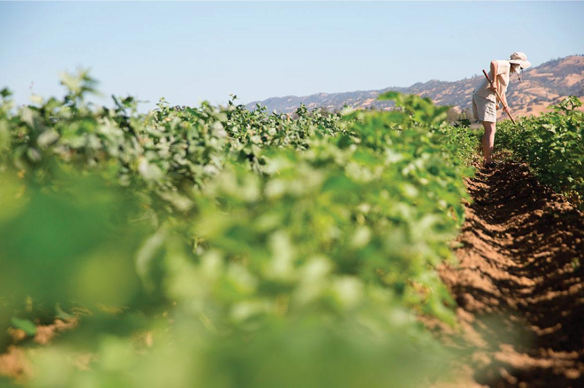 akomplice organic cotton